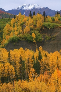 An Alaskan Fall day looking at huge piles of conglomerate